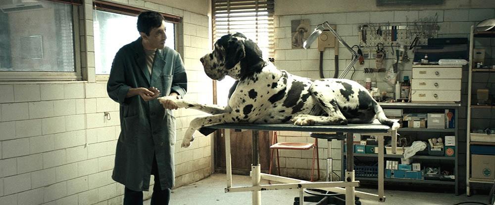 Dogman - Szenen - 02 Scene Picture-2